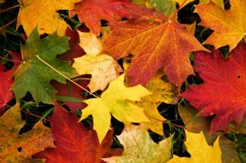 otoño 01