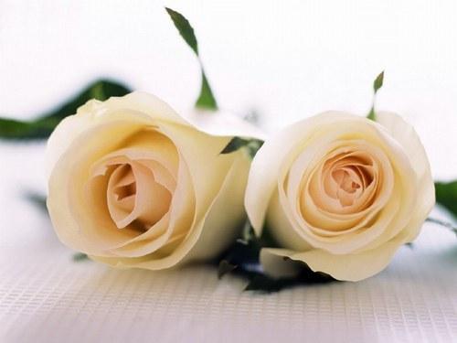 Rosas para celebrar lo bueno de la vida: que alguien te ame