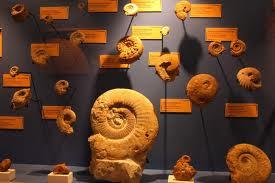 museo dinópolis
